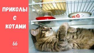 Смешные КОТЫ КОТИКИ КОТЯТА Приколы с животными 66