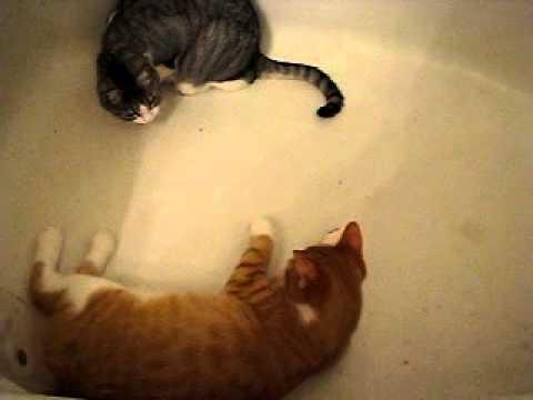 Rumpy the manx cat bathtub adventure part 1