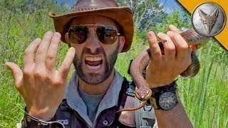 SNAKE BITE...is it Venomous?! thumbnail