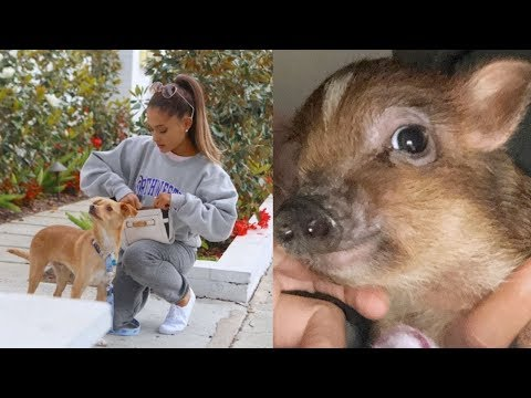 All of Ariana Grande's Pets (2019)