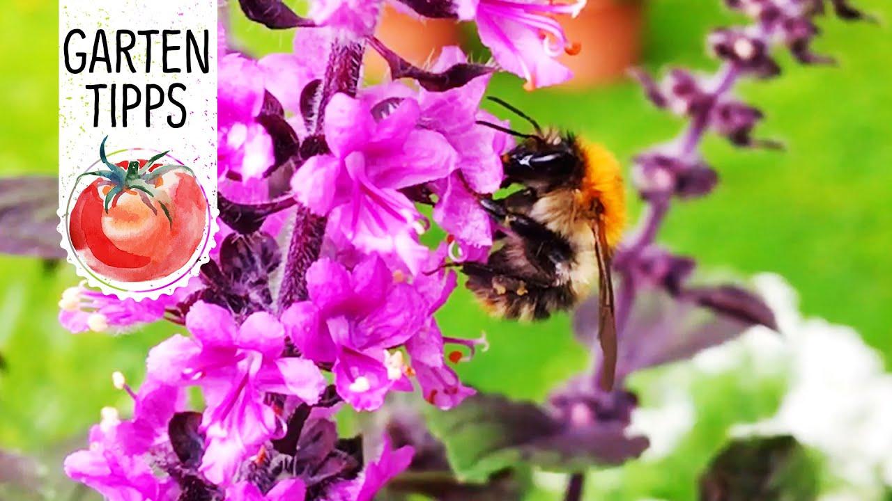 Bienenfreundliche Blumen Und Krauter Volmary Gartentipps Youtube