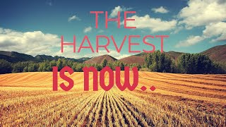 THE HARVEST IS NOW with BLAISE MIRINDI https://fb.watch/60BwikxrAc/