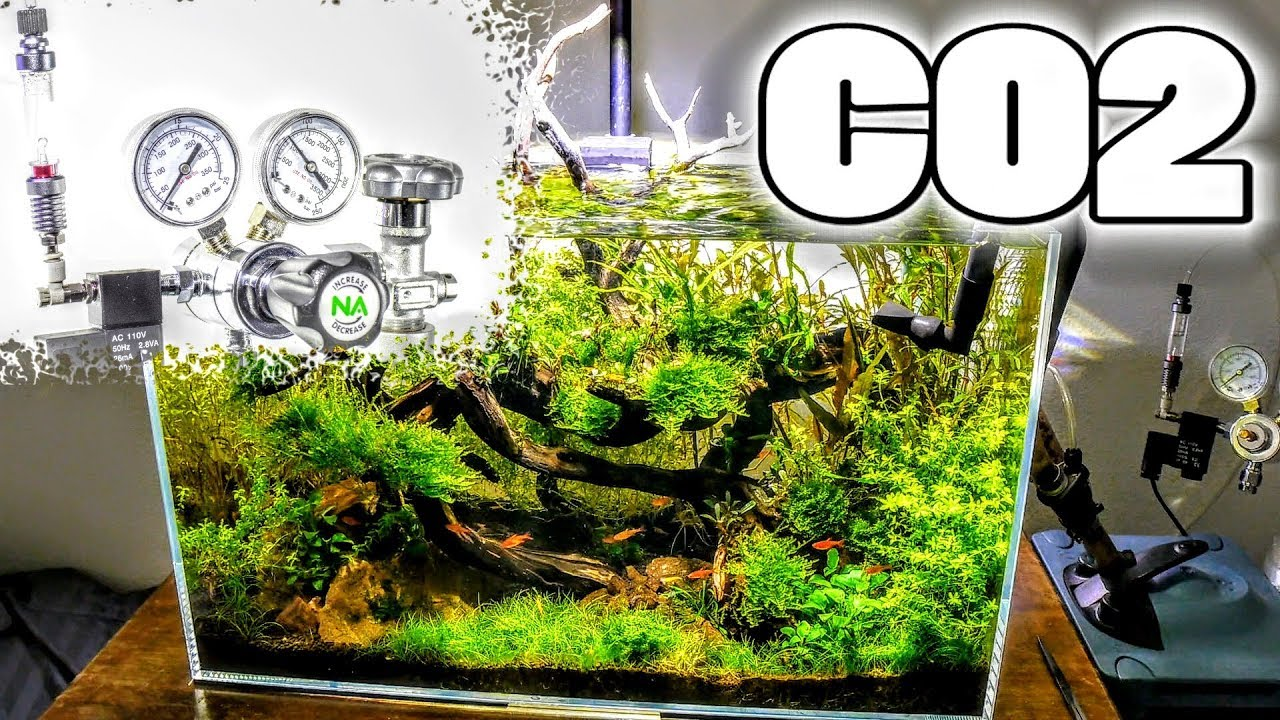 Optimizing Your Co2 Surface Scum Light Co2 Relationship Aquascaping Youtube