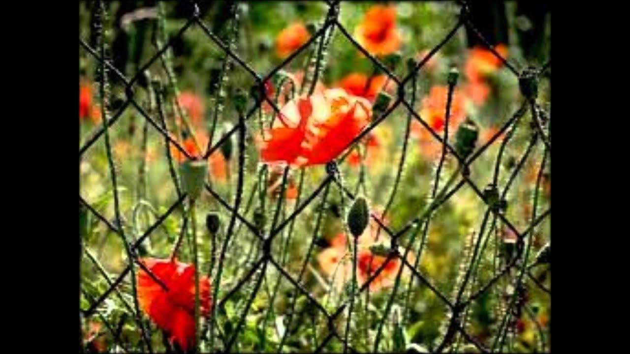 tinapu-koronan-flores-j-antoinette