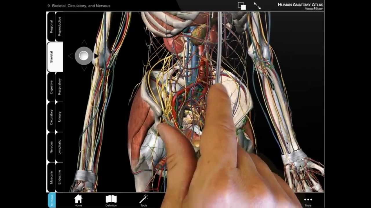 Human Anatomy Atlas Android Tablet Tutorial Youtube