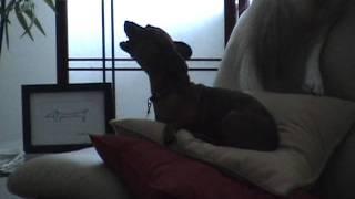 Zippy The Backup Dog