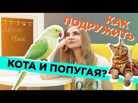 Как подружить кота и попугая?