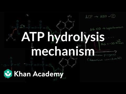 ATP hydrolysis mechanism | Energy and enzymes | Biology | Khan Academy
