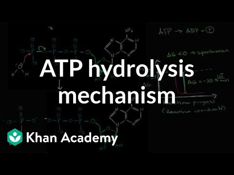 ATP hydrolysis mechanism | Energy and enzymes | Biology | Khan Academy