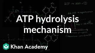 ATP Hydrolysis Mechanism