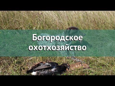 Охота в Ярославской области – Богородское охотхозяйство охота на лося в Ярославской области
