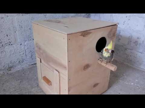 Гнездо для кореллы своими руками чертежи