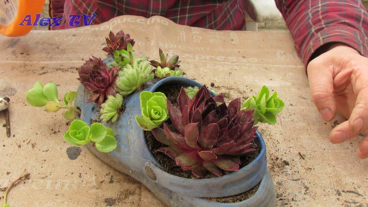 Ideen für originele Pflanzgefäße.Alte Gartenschuhe mit Sukkulenten bepflanzen.
