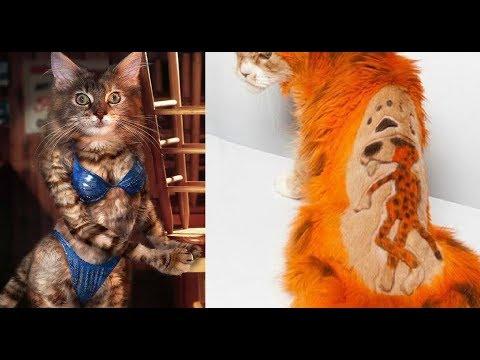 Лютые стрижки котов. Кот ПАНК и КОТ ЧЕЛОВЕК.