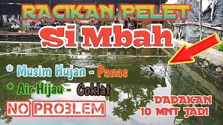 Download Video Tes Umpan Coklat#Mancing ikan mas di Air hijau, Air coklat#Musim Hujan- Panas No Problem MP3 3GP MP4