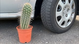 Crushing Crunchy & Soft Things by Car! - EXPERIMENT: CACTUS VS CAR
