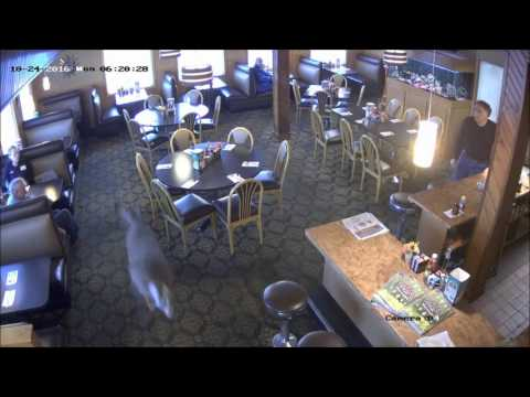 Deer Runs Around Restaurant