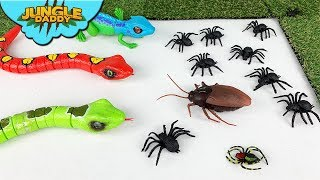"LIZARDS & COCKROACH Toys!! ""Jungle Daddy"" crawling insects for kids reptiles"