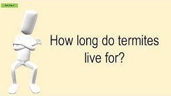 How Long Do Termites Live For?