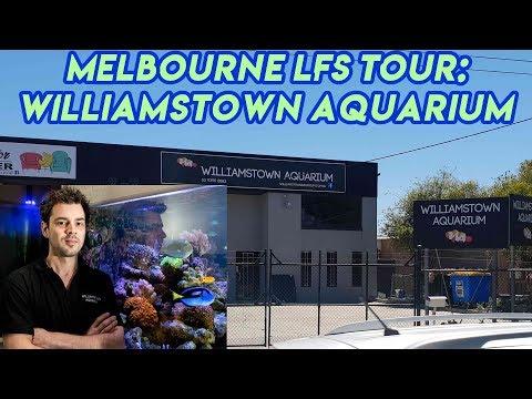 Melbourne LFS Tour - Williamstown Aquarium
