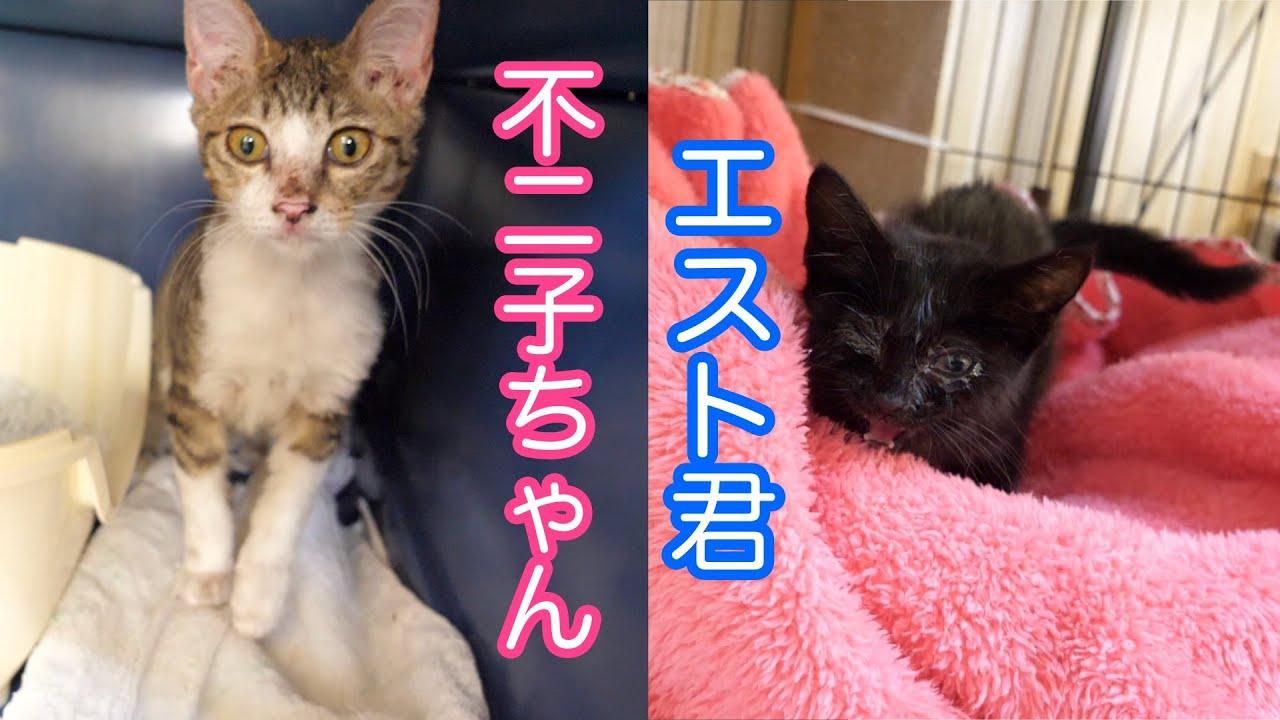 【保護猫】2匹の子猫を一時預かりました