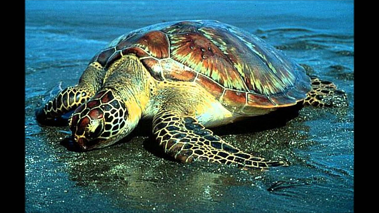 sea animals ocean animal wallpapers turtle creatures preschoolers