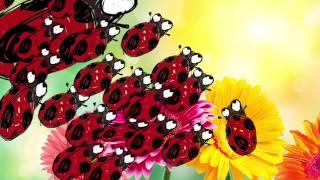 Walk Like A LadyBug Trailer