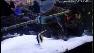 225 gallon fowlr saltwater fish tank