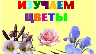 Изучаем цветы. Учим название цветов. Развивающее видео для детей с заданиями(Изучаем цветы. Учим название цветов. Развивающее видео для детей с заданиями Подписывайтесь на канал Ymnyashki..., 2016-07-15T09:48:07.000Z)