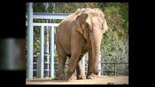 San Diego Zoo Coupons Can Save You Money