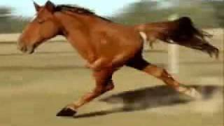 Two Legged Horse - Funny Horse Video