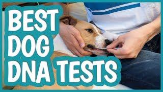 Best Dog DNA Test in 2019 | TOP 6 Dog DNA Tests