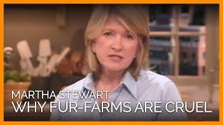 Martha Stewart Discusses Fur-Farm Cruelty