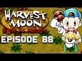 Flower Garden | Harvest Moon | Back to Nature EP.88