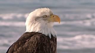 Удивительная Природа - 🦊 Дикие Животные 🐺 - Интересное видео