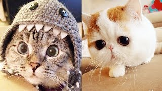 THE CUTEST CATS In The World