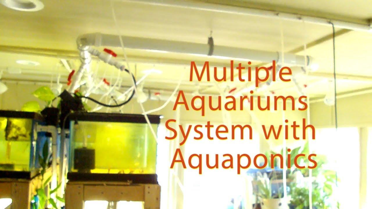 multiple aquariums system recirculating water incorporating