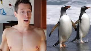 Brokeback Iceberg: Gay Penguins!