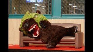 【ゆるキャラ】メロン熊、夜のビバシティ彦根に登場【恐怖】 thumbnail