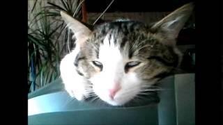 Мой кот Том спит с открытыми глазами) Жесть!