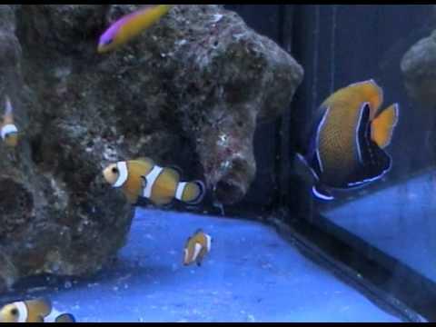 Acquario mediterraneo vendita acquari milano rem for Vendita pesci acqua dolce fredda