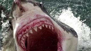 Najgroźniejsze zwierzęta świata. Lista Fokusa. Dokument
