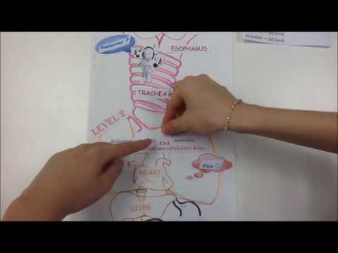Master Abstract Thinking - A Psychology Video