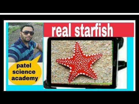Starfish (original)