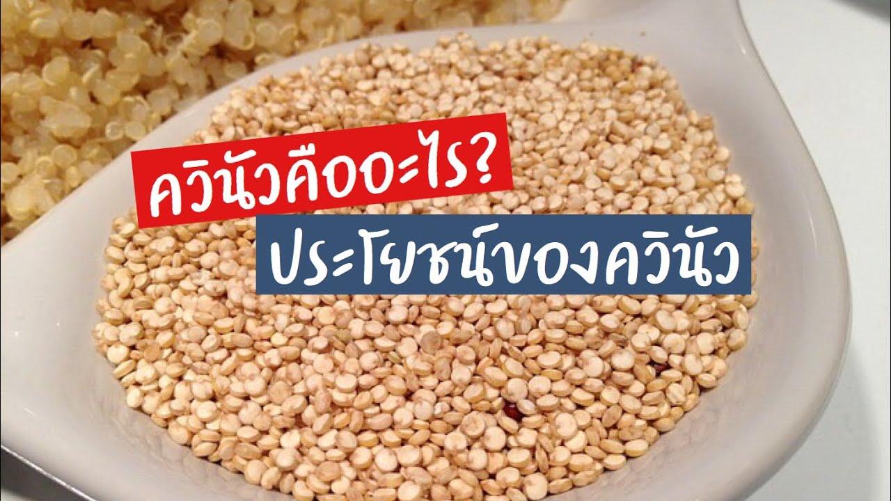 ควินัวคืออะไร?   ประโยชน์ของควินัว   ควินัว   ควินัวทำอะไรได้บ้าง   ควินัวป้องกันโรค   สุขกับการกิน