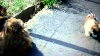 猫と子犬が一緒に散歩.