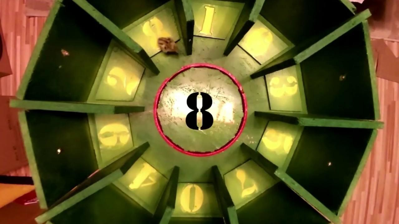 Lottozahlen Glückszahlen