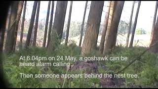 Illegal activity uncovered at goshawk nest, North Yorkshire