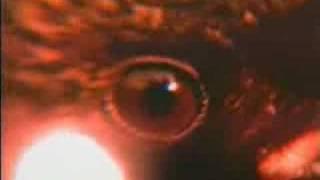 Обложка Magic Affair Feat Anita Davis Night Of The Raven