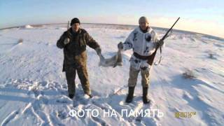 Охота на зайца русака троплением